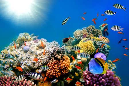 picada: Pinturas brillantes de corales reeves Foto de archivo