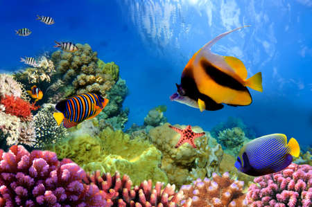 Marine life on the coral reef photo