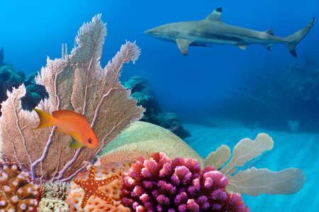 Foto van een koraal kolonie, rode zee, Egypte Stockfoto