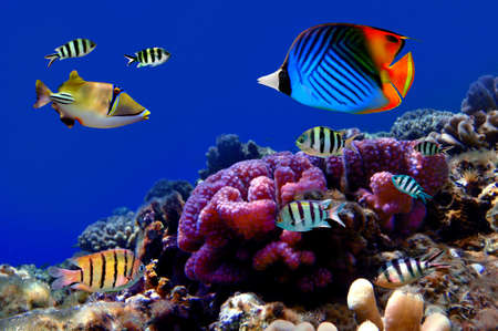 Photo of a coral colony on a reef top Stock Photo - 9488593