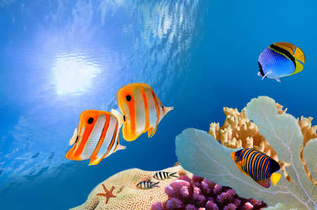Reef with a variety of hard and soft corals and tropical fish