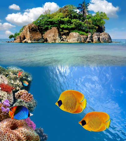 Photo of a coral colony on a reef top, Siam Bay, Thailand photo
