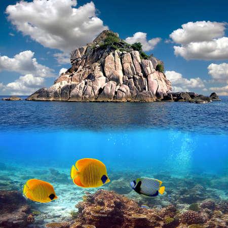 熱帯の楽園とサンゴ サンゴ礁トップ、タオ島、タイで