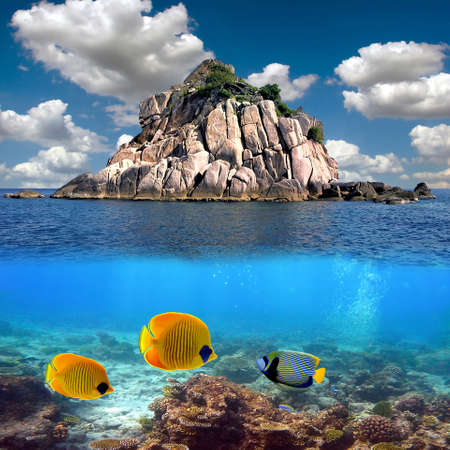 Tropical paradise and corals on a reef top, Koh Tao island, Thailand