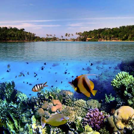리프 위쪽, 코 Cahg 섬, 태국에 산호 식민지의 사진