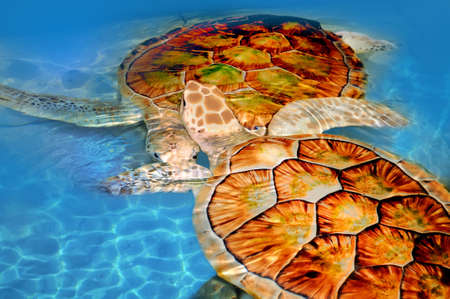 Green sea turtle swimming in ocean sea photo