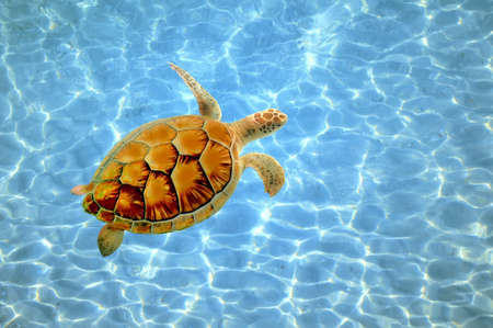 a sea turtle quietly swimming near the bottom