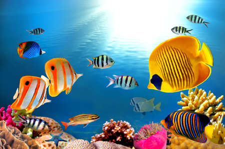 Foto einer Kolonie Korallen