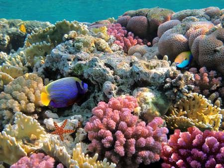 산호 식민지의 사진, 홍 해, 이집트 스톡 콘텐츠