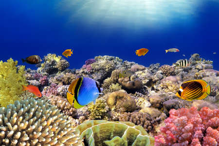 haiti: Underwater world. Coral fishes of Red sea. Egypt.