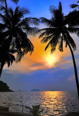 Palm with sunset.