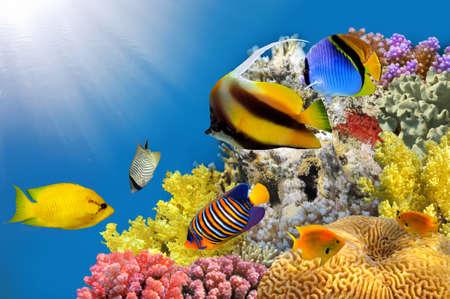 Foto van een koraal kolonie op een rif top, Rode Zee, Egypte. Stockfoto