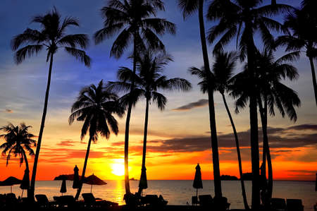 palm trees silhouette: Coconut palms on sand beach in tropic on sunset. Siam Bay.Thailand