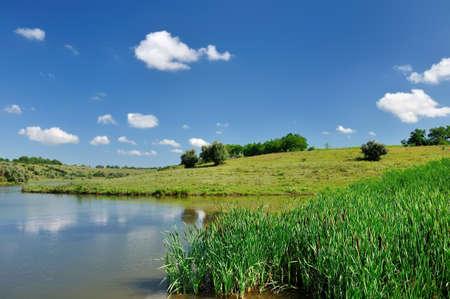 riverside trees: Summer landscape with scirpus