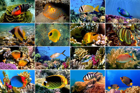 Set of 16 tropical fishes close-up. Underwater concept Stock Photo