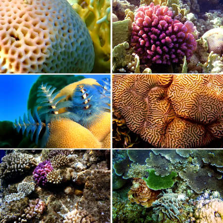 acropora: Set of 6 corals images. Underwater concept  Stock Photo