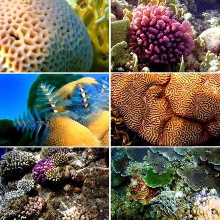 sarcophyton: Set of 6 corals images. Underwater concept  Stock Photo