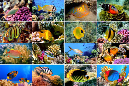pomacanthus imperator: Set di 16 pesci tropicali close-up. Concetto di Underwater