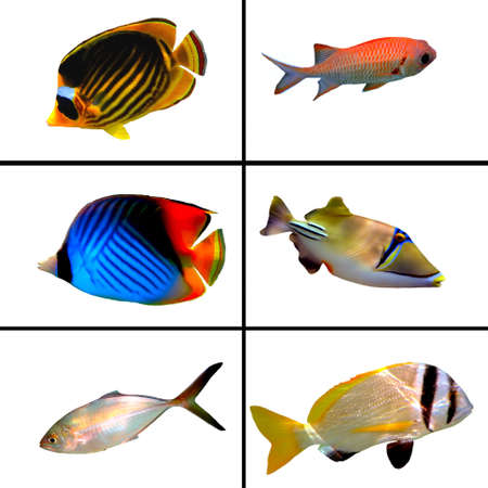 열대어 수집, Bannerfish, Labroides Dimidiatus, 두 금지 Rabbitfish, 마스크 나비 물고기, Rhinecanthus의 assasi
