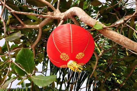 Chinese styled lantern hanging in tropical environment. photo