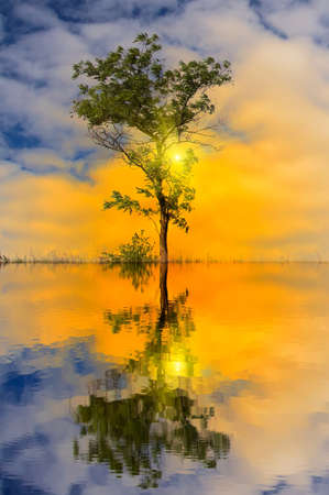 radiant light: Water and tree sunset