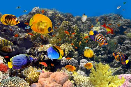 산호와 물고기 스톡 콘텐츠