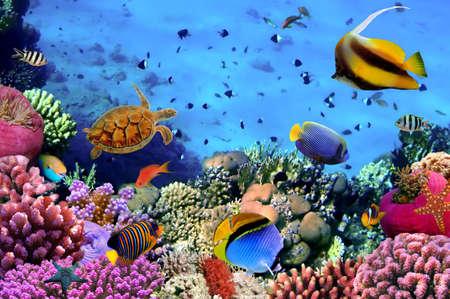 암초, 이집트에 산호 식민지의 사진
