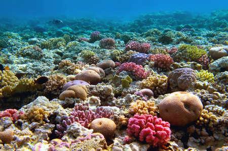 산호초, 홍 해, 이집트. 스톡 콘텐츠