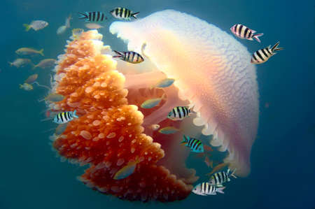 barrier: Peaceful image of a mosaic jellyfish  Stock Photo