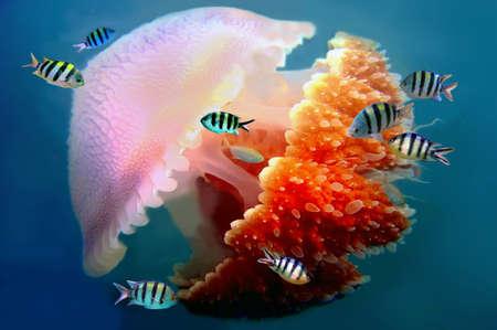 촉수 거대한 해파리 수영 수중 다음