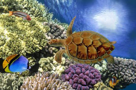 물고기와 선명한 산호초의 수중 촬영