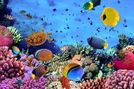 aquarium: Hình ảnh của một thuộc địa san hô, Biển Đỏ, Ai Cập