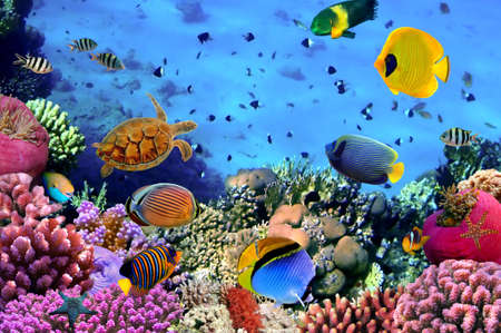 aquarium: Photo of a coral colony, Red Sea, Egypt