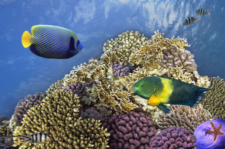 school of fish: Underwater shoot of vivid coral reef with a fishes