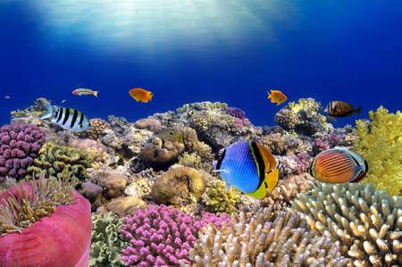 붉은 바다 이집트의 수중 세계 산호 물고기 스톡 콘텐츠
