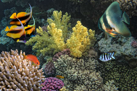 hardcoral: Photo of a coral colony  Stock Photo