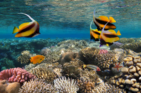 school of fish: Photo of a coral colony  Stock Photo
