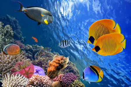 coral ocean: Underwater world Stock Photo