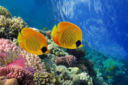 サンゴ礁と日光の熱帯魚 写真素材