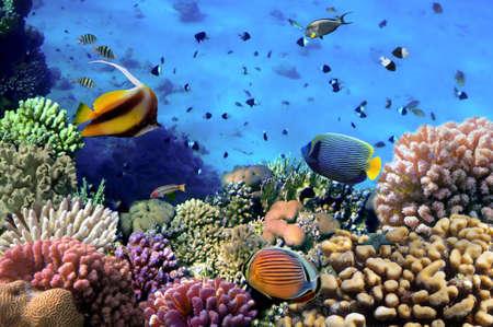 珊瑚のコロニーの写真