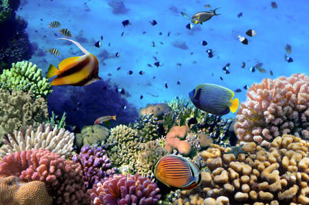 hardcoral: Photo of a coral colony