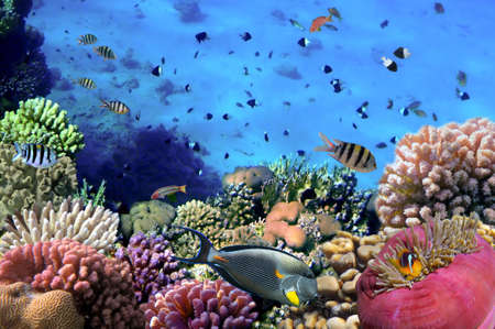 eilat: Photo of a coral colony