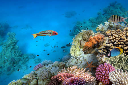 school of fish: Photo of a coral colony