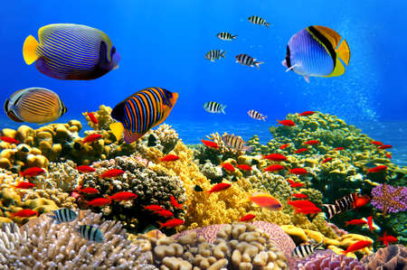 school of fish: Photo of a coral colony on a reef,  Red Sea, Egypt Stock Photo