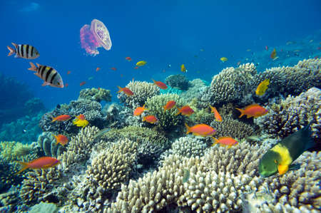 붉은 바다의 세계 산호 물고기 이집트