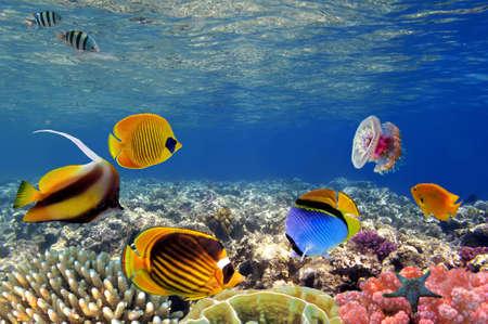 Onderwater leven van een hard-koraal rif, Rode Zee, Egypte Stockfoto