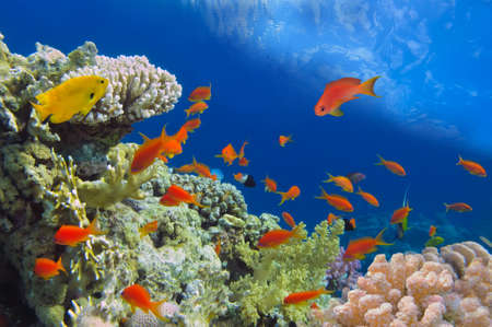 Underwater shoot of vivid coral reef with a fishes, Red Sea, Egypt Stock Photo - 23283389