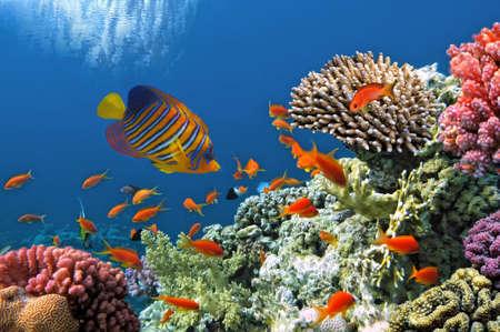 붉은 바다에서 산호초의 열대어