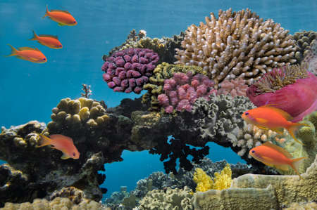 bottom of sea: Underwater shoot of vivid coral reef with a fishes