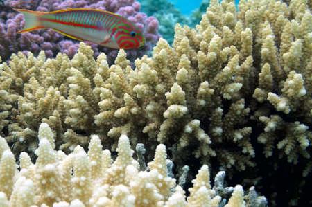 hard coral: hard coral